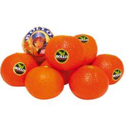 clementina bollo